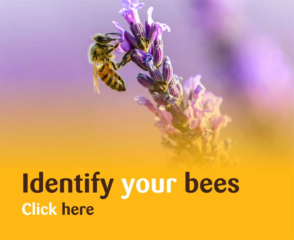 Identify your bees