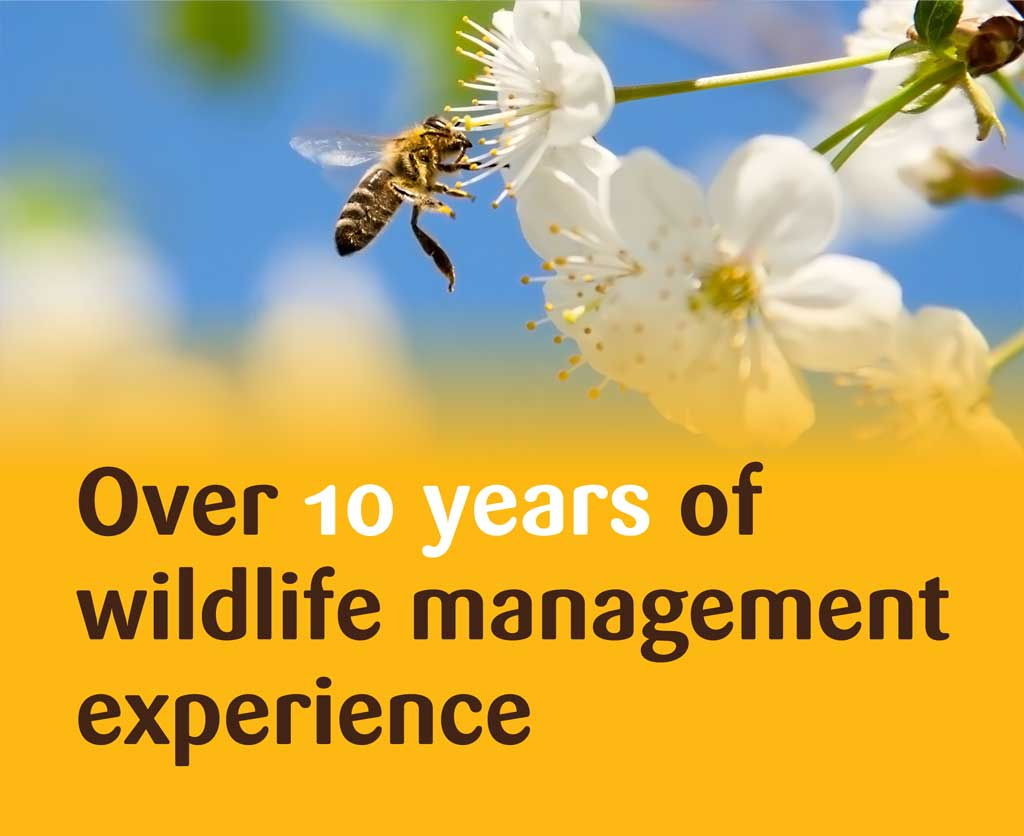 Over 10 years of Wildlife Management