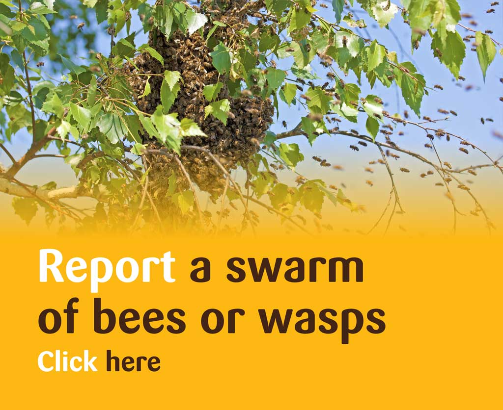 Report a Swarm of Bees